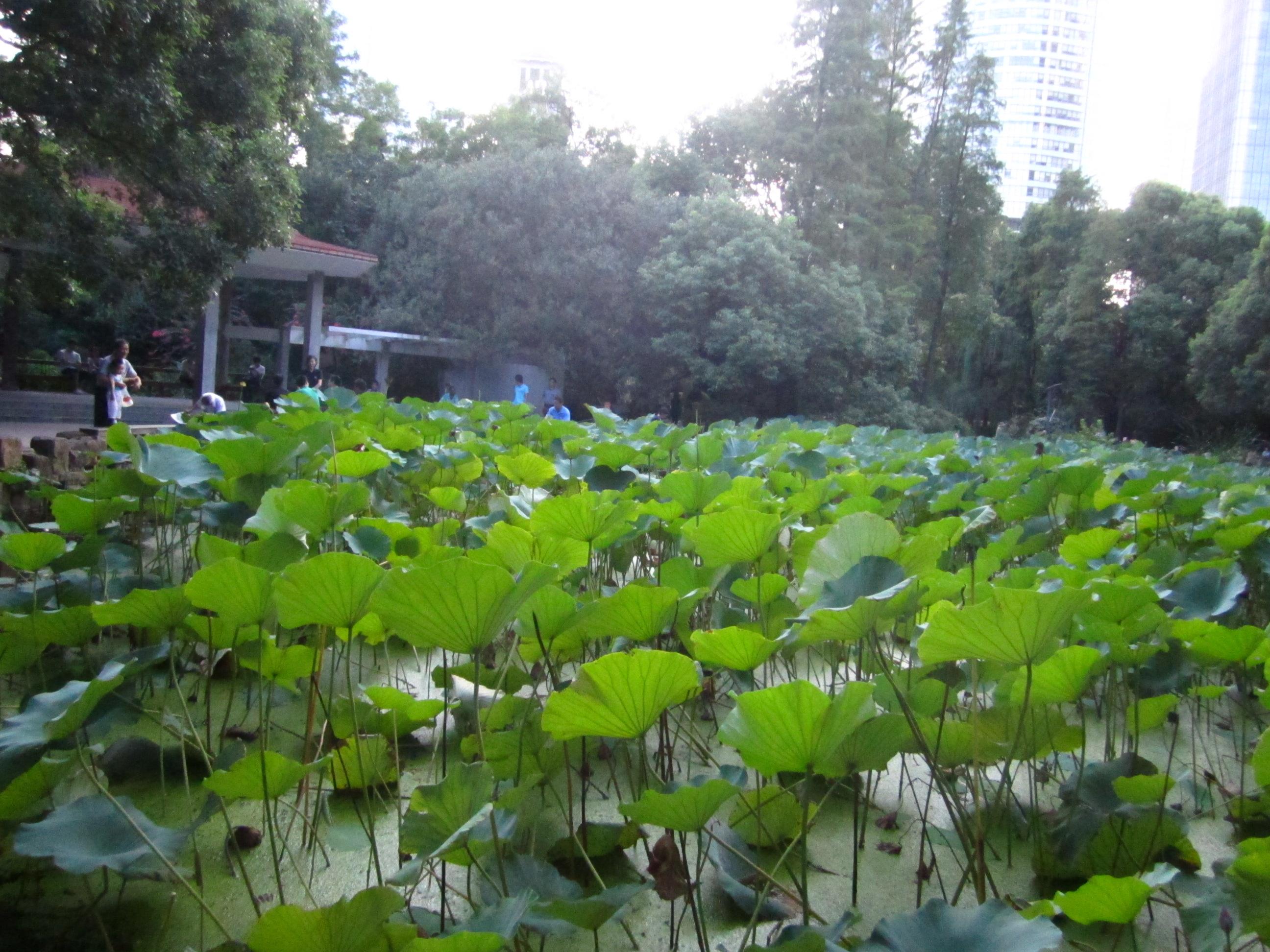 Shanghai matchmaking park-in-Bluff